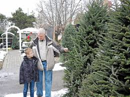 Thousands Of Christmas Trees Sold Weekly At Rochester Hills Based Sherwood Forest Garden Center