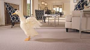 pet friendly carpet best carpet for pets pet owners mohawk
