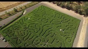 Petaluma Pumpkin Patch Corn Maze Map by The 2017 Petaluma Corn Maze Drone Youtube