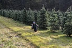 Christmas Tree Farm Lincoln Ne by Cut Down A Christmas Tree In Thurston County Thurstontalk