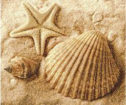 100 Sea Shell Design Shell Photo Stitch Free Embroidery Design Free Embroidery