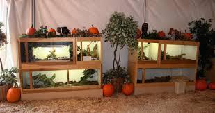 Pumpkin Patch Tarantula For Sale by The Reptile Zoo Bits U0026 Bites All Posts Tagged U0027snake U0027