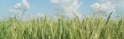 chambre agriculture du tarn s enregistrer chambre d agriculture du tarn et garonne
