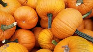 Roger Williams Zoo Pumpkin Spectacular Times by Pumpkins Make Comeback After Bad Crop Last Year In Illinois Here