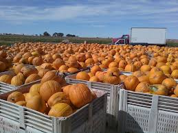 Colorado Pumpkin Patch by Free Images Nature Sky Fall Transport Truck Food Produce
