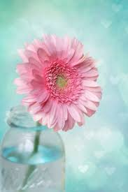 881 best aqua pink and white images on pinterest flowers