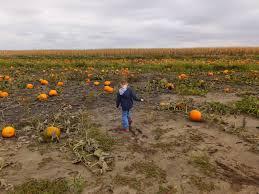 Best Pumpkin Patch Des Moines by Kidspert Frey U0027s Pumpkin Patch