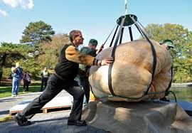 Clarence New York Pumpkin Farm by New York Today New York Today Return Of The Giant Pumpkins