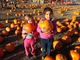 South Reno Pumpkin Patch by 10 Great Pumpkin Patches In Nevada