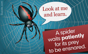What Do Spiders Eat? You Just Can't Guess It! Barn Spider Photography Nature Pinterest Update Spiders Still Dont Bite Arthropod Ecology Beneficial In The Landscape 49 Bana Nephila Tegenaria Domestica Wikipedia Grass Spiders At Spiderzrule Best Site World About Spiderlings Eat Mother Youtube Myths Burke Museum What Are Some Common Montana Animals Momme 7 Bug And Squashed National Geographic Society Blogs Neighbourhood Agriculture Food Molting