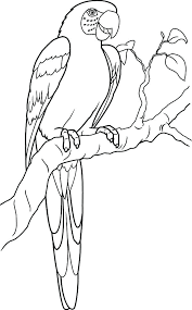 Parrots Coloring Pages Parrot Animal Page Animals Town Color Sheet