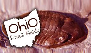 Northwest Ohio Pumpkin Patches by Fossil Hunting Parks In Ohio Akron Ohio Moms