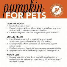 Feeding Dog Pumpkin Constipation by Info Puppy Policies
