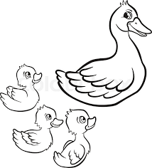 Coloring Pages Kind Duck And Free Little Cute Ducklings Swim On The Lake They Are Happy Smile