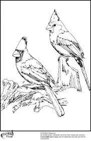Cardinal Coloring Pages Www Bloomscenter Com New Page