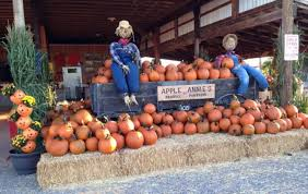 Pumpkin Patch In Long Island New York by 11 Pumpkin Patches To Visit In Arizona