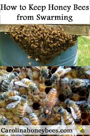 66 Best Images About Keeping Bees As Hobby On Pinterest Welcome To The Hive Beverly Bees Beginners Guide Keeping Bee Keeping And Bkeeping Backyard Beehive Image With Capvating How Keep Out Of Like A Girl 10 Mistakes New Bkeepers Make References The Honey Bee Honey Everything You Need To Know About Producing Your Best Images Picture Raise In How Much Room Should I Give My Bees Bees In Backyardbees Huney Back Yard Bulgari 6 Awesome Designs Inhabitat Green Design For Step By