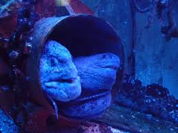 grand aquarium de malo aquarium st malo picture of grand aquarium malo tripadvisor