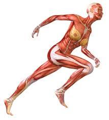 douleur interieur genou course a pied le de l essuie glace daniel benjamin podologue