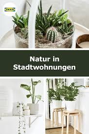ideen ikea pflanzen pflanzen wohnzimmer pflanzen
