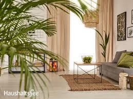 palme pflegen in der wohnung licht temperatur und düngung