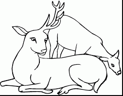 Terrific Deer With Antlers Coloring Pages Page And Printable Free