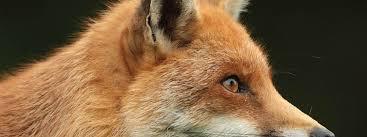 5 Incredible Wildlife Encounters In Britain