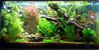 aquarium d eau douce aquarium amazonia led par shan aya