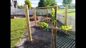 Trellis For Grapes - YouTube Backyards Splendid Simple Arched Trellis For Grapes Or Pole Backyard Hop Outdoor Decorations Pictures On Excellent Wondrous Arbor Ideas 41 Grape Vine How To Build Grapevine Trellis Bountiful Pergola My Kiwi That I Built From Diy Itructions Things How Build A Raspberry Youtube Grape Vine Roselawnlutheran Stunning Vines Design Over Spaces Noteworthy