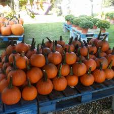Johnson Brothers Pumpkin Patch Christmas Trees by Veggie Patch Produce Market Home Facebook