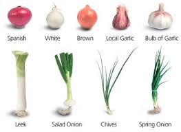 onions garlics and leeks www coolgarden me
