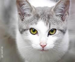 kitty cat hey there kitty cat by shesprettyodd on deviantart
