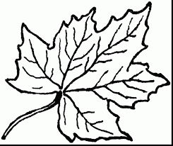 Terrific Maple Leaf Clip Art Black And White With Fall Leaves Coloring Pages Small