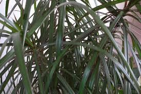 plantes vertes d interieur nourrir les plantes vertes d intérieur