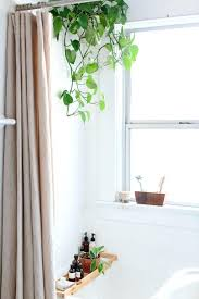 Good Plants For Windowless Bathroom by Amusing Plants For Bathrooms Plants Decorate Modern Bath Greenery