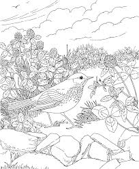 Free Printable Coloring PageVermont State Bird And Flower Hermit Thrush