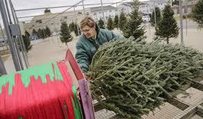 Iowa Christmas Tree Sales Hold Steady