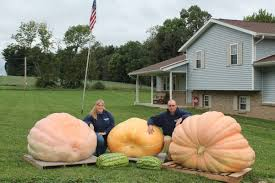 Atlantic Giant Pumpkin Record by Blog Giant Pumpkins Are A Labor Of Love For The Moshers Farm