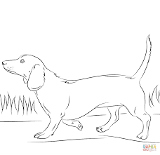 Weiner Dog Coloring Pages Dachshund Page Free Printable Drawing
