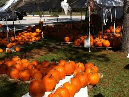 Pittsburgh Area Pumpkin Patches by Looking For A Pumpkin Patch Carrollwood Fl Patch