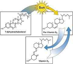 history of the discovery of vitamin d and its active metabolites