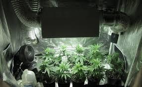 chambre de culture cannabis complete construire votre propre salle de culture