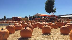 Pumpkin Patch Farm Half Moon Bay by The Best South Bay Pumpkin Patches For Kids And Adults