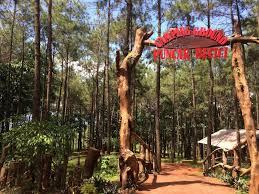 Puncak Becici Yaitu Camping Ground Bisa Menjadi Salah Satu Alternatif Mendirikan Tenda Dan Menikmati Malam Di Tengah Hutan Pinus Imogiri Bantul Jogja