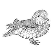 Coloring Pages Print Mandarina Duck Vectores