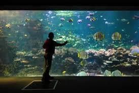 aquarium geant a visiter belgique plus de 25 idées uniques dans la catégorie nausicaa boulogne sur