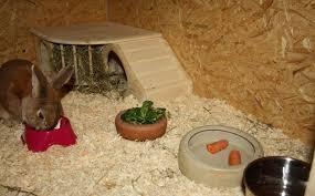 sinnvoll den kaninchenstall einrichten kaninchenstall