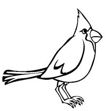 Cardinal Sound Of Bird Colouring Page