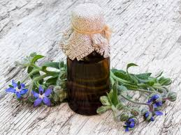 Pumpkin Seed Prostate Congestion by Borage Oil Benefits Uses U0026 Side Effects Organic Facts