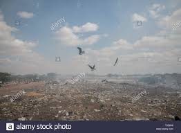 100 Flying Cloud Camp Birds Seen Flying Above Burning Rubbish In The Refugee Camp Dadaab